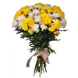 Желто-белые хризантемы